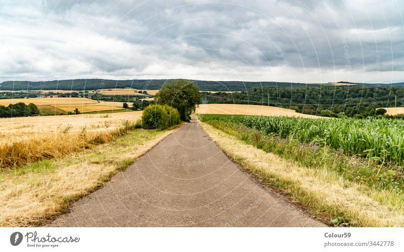 Landwirtschaftliche Felder keine Menschen ländlich Sommer Ackerbau Weg Straße Gras Wiese grün Natur Landschaft Ansicht Himmel blau Hintergrund schön Saison