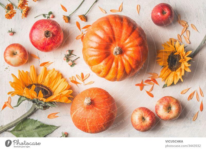 Komposition mit Kürbissen, Sonnenblumen und Äpfeln auf weißem, rustikalem Hintergrund. Ansicht von oben Zusammensetzung gemacht Draufsicht organisch