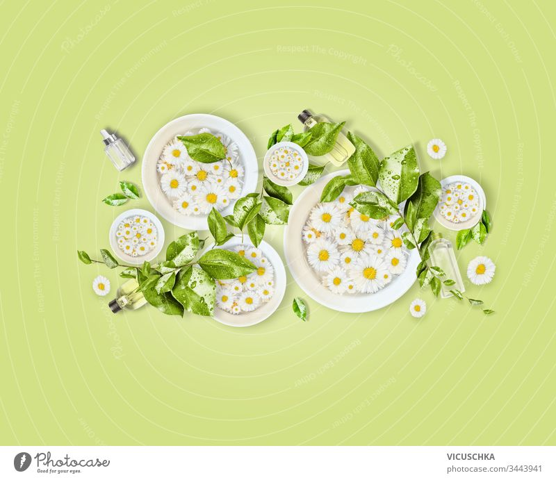 Weiße Wasserschalen mit Gänseblümchen, grünen Blättern und Naturkosmetikprodukten zur Hautpflege auf hellgrünem Schreibtischhintergrund. Ansicht von oben. Modernes Schönheitskonzept. Gesunder Lebensstil. Zusammensetzung