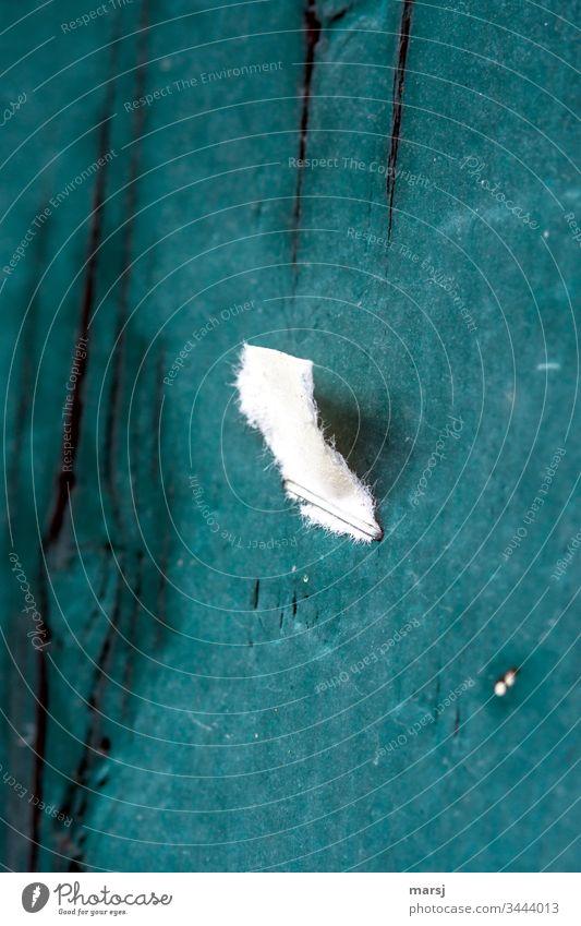 Abgerissener Zettel, angetackert an grün lackierte Holzwand Papier abgerissen Heftklammer Überbleibsel düster trist Tristesse Hoffnungslos Petrolfarben