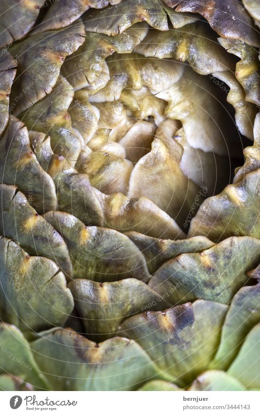 gekochte Artischocke auf einem blauen Teller Nahaufnahme Muster Design Natur essen frisch fraktal fibonacci mariniert servieren Italienisch Essen gesund