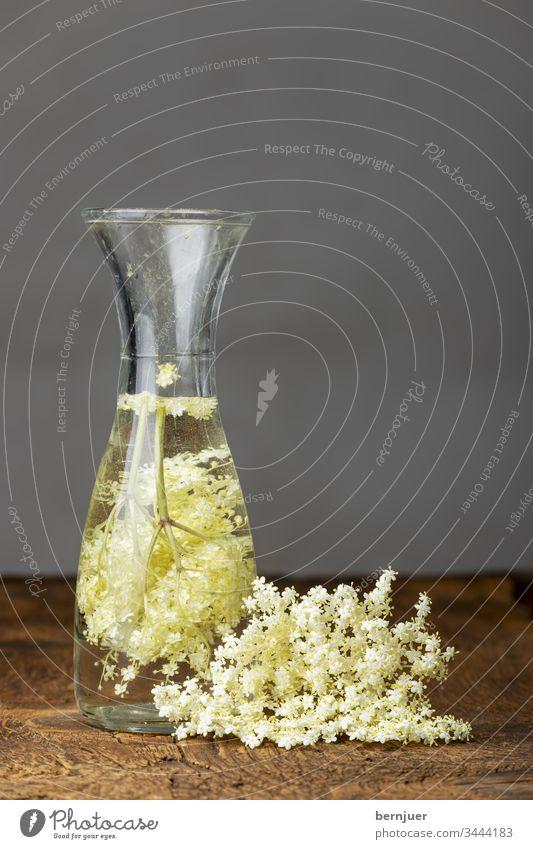 Holunderblütensaft auf dunklem Holz Pflanze gesund weiß Holundersaft Hintergrund grün Frühling Natur Blume Essen Älteste Medizin Blüte Kraut Zweig Zutat
