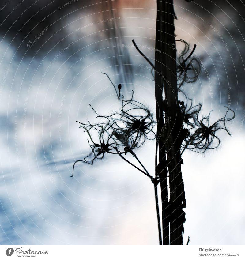 Yesterday Pflanze Himmel (Jenseits) Blume Gras Sträucher Todesangst Höhenangst Stengel Botanik Moos Nutzpflanze Grünpflanze Efeu Wildpflanze Große Klette Ungewisse Zukunft