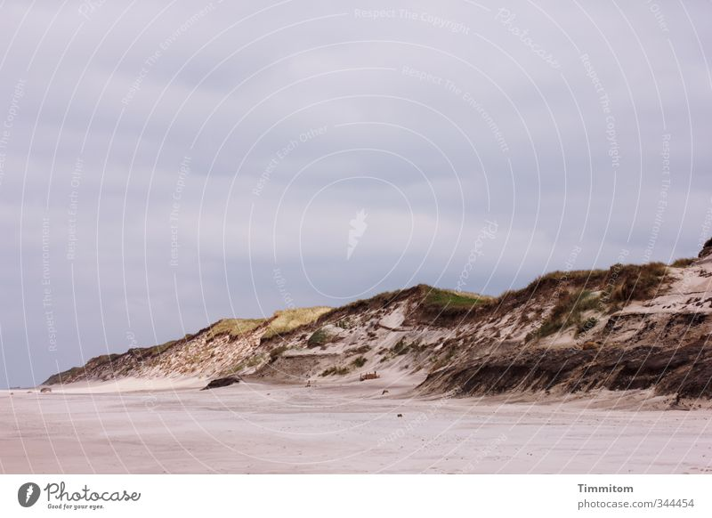 Strandbummel. Ferien & Urlaub & Reisen Umwelt Natur Landschaft Himmel Nordsee Düne Dünengras Sand ästhetisch Gefühle ruhig Farbfoto Gedeckte Farben