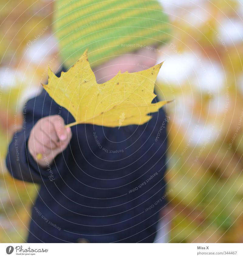 Herbstlich Mensch Kind Hand Freude Blatt gelb kalt Herbst Kindheit Baby Fröhlichkeit Kleinkind Mütze Herbstlaub Sammlung herbstlich