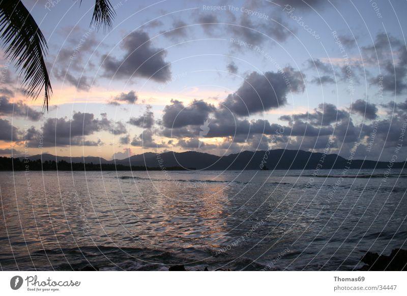 Karibik Strand Meer Sonnenuntergang Palme Kuba Abenddämmerung Menschenleer Palmenwedel Ferne Wolkenhimmel Gegenlicht