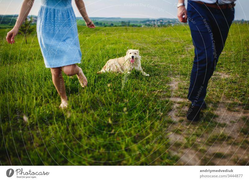 glückliche Hündin ruht sich mit ihrem Besitzer in der Natur aus. viel Spaß mit ihrem Hund im Park Glück Haustier Menschen Lifestyle Liebe niedlich Fröhlichkeit