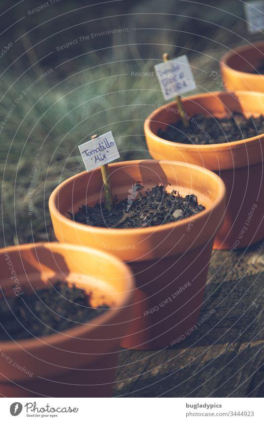 Eine Reihe von Tonblumentöpfen gefüllt mit Erde und mit Pflanzschildern markiert Blumentopf Blumentöpfe tontöpfe Pflanzen Tomatillo aussähen Blumenerde Natur