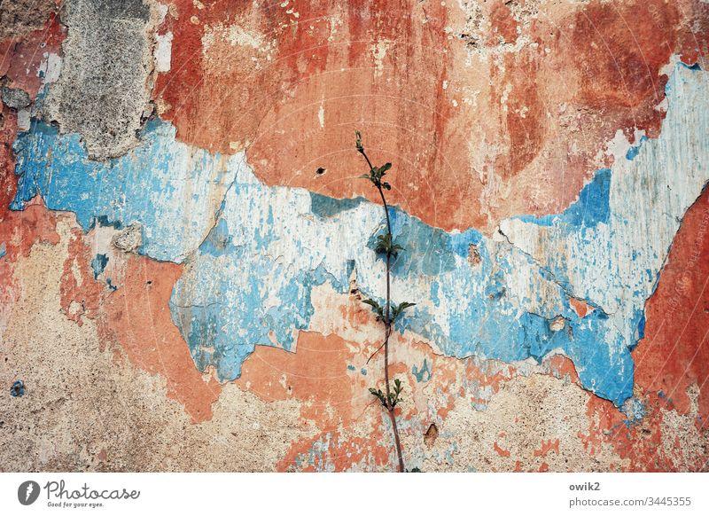 Zartes Grün Wand schrundig heruntergekommen schadhaft alt trashig Wandfarbe rot blau Vergänglichkeit Vergangenheit Verfall Mauer Außenaufnahme Tag kaputt