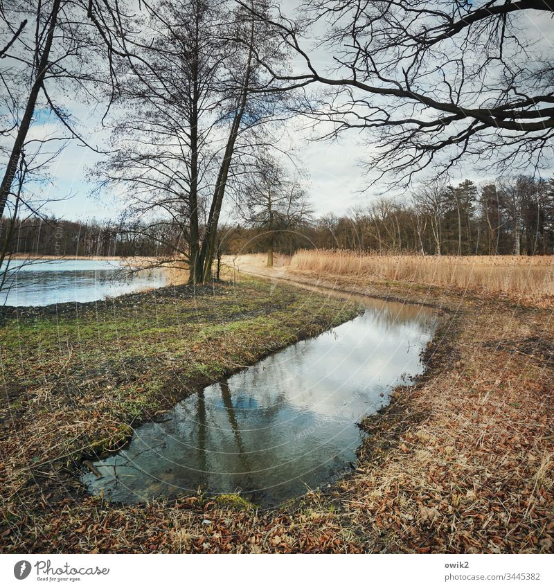 Kanal voll Natur draußen Außenaufnahme schönes Wetter herbstlich Bäume Horizont Wald Wasser Teich See Wasserwindstill Reflexion & Spiegelung Umwelt Seeufer Tag