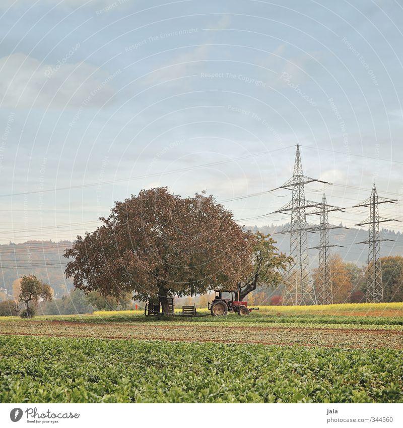spätsommer Landwirtschaft Forstwirtschaft Umwelt Natur Landschaft Himmel Sommer Herbst Pflanze Baum Grünpflanze Nutzpflanze Feld Traktor natürlich Farbfoto
