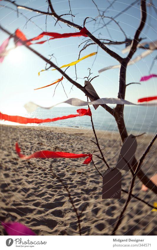 Der Wunschbaum Baum Freude Strand Gefühle Küste Glück Fröhlichkeit Sehnsucht Ostsee Fernweh