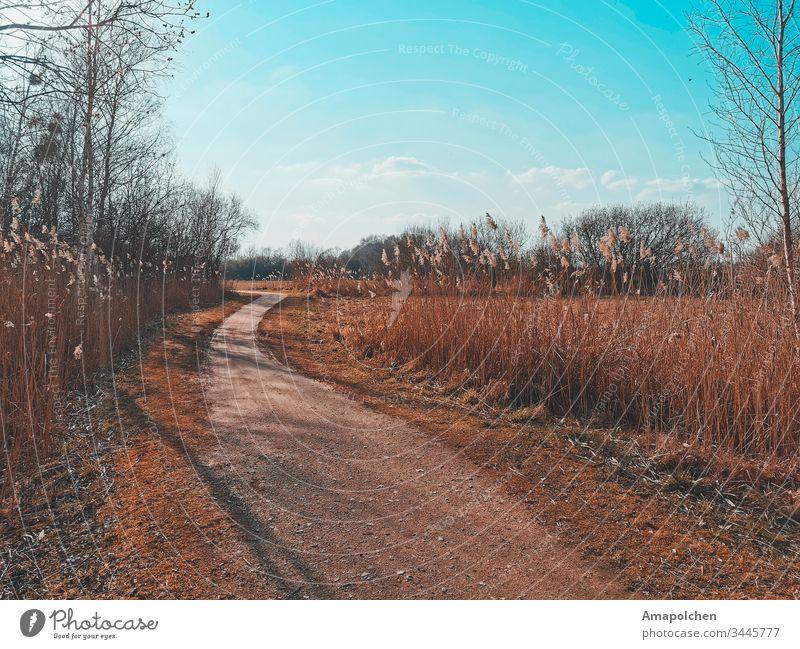 Weg im Feld Wege & Pfade Straße See Seeküste Wald Ostern Radfahren Waldrand Waldspaziergang wandern Schilfrohr Spaziergang gehen Winter Frühling Frühlingstag