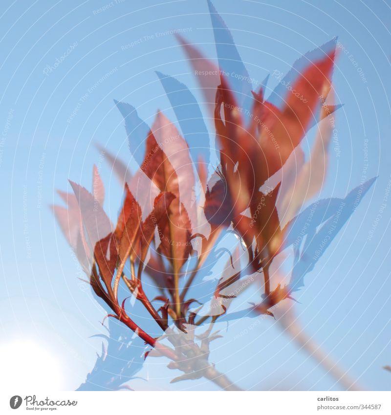 Essig wächst auf Bäumen ? Himmel Pflanze Frühling Wachstum ästhetisch Doppelbelichtung Grünpflanze Blattknospe Essigbaum