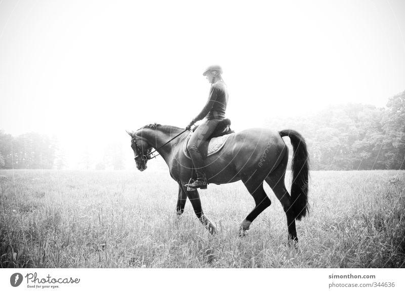Reiten Reitsport Natur Feld Wald Pferd Abenteuer Zufriedenheit Bewegung bizarr elegant Erholung erleben Ferien & Urlaub & Reisen Lebensfreude Leichtigkeit