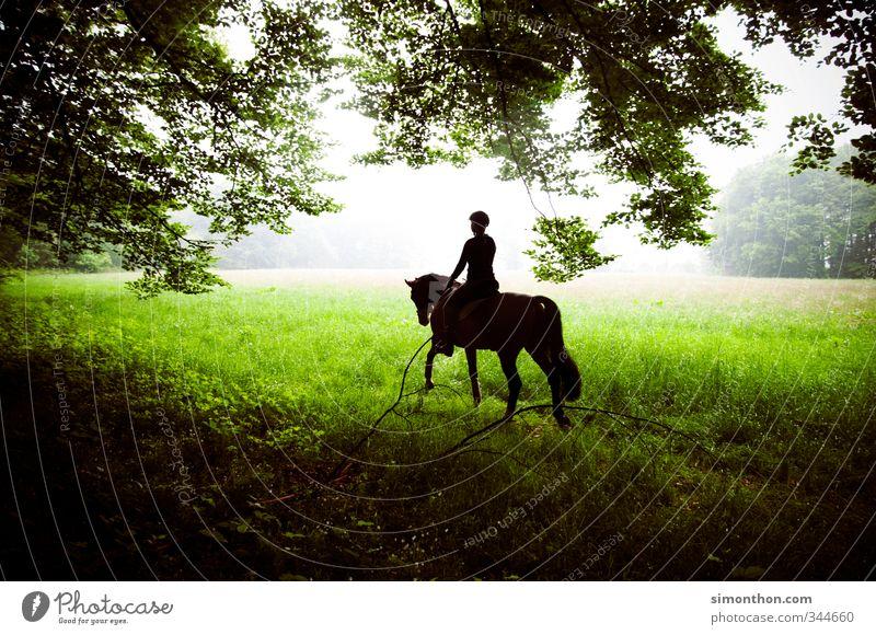 Reiten Jagd Reitsport Natur Wiese Feld Wald Pferd 1 Tier Abenteuer Zufriedenheit Bewegung Duft Erholung erleben Ferien & Urlaub & Reisen Freizeit & Hobby Freude