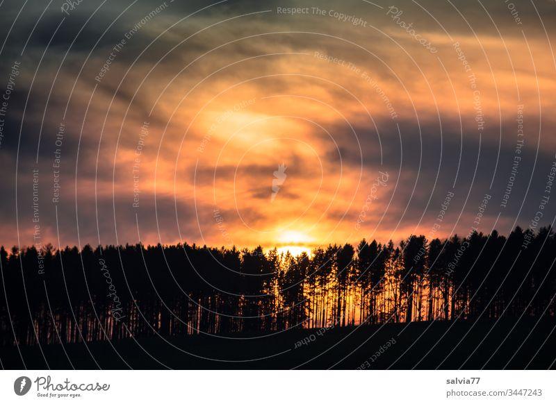 Sonnenuntergang mit Wolken und Waldsilhouette Natur Bäume Abend Abenddämmerung Himmel Abendsonne Dämmerung Menschenleer Landschaft Silhouette Textfreiraum oben