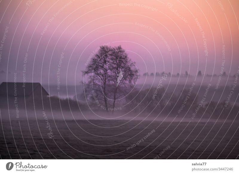 Morgenstimmung mit Nebel Landschaft Natur Umwelt Farbfoto Pflanze Herbst Außenaufnahme Baum Morgendämmerung Gedeckte Farben Menschenleer natürlich Wiese