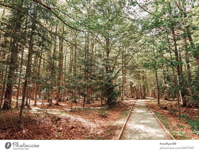 Markierter Pfad im Naturpark Ordesa Abenteuer alpin Gegend Herbst blau Tag Europa erkunden fallen Frau grün Wanderung wandern Landschaft monte perdido