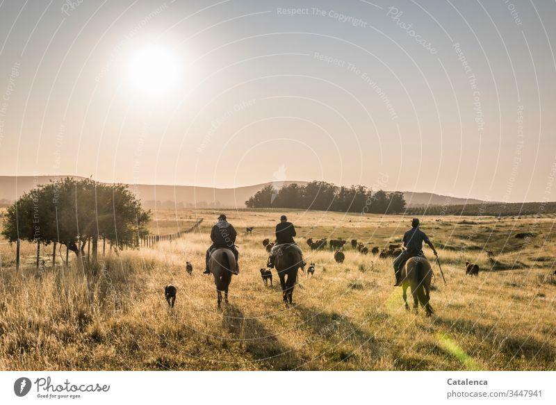 Dreiklang | Hufgeklapper dreier Pferde früh morgens Reiter Hunde Rinder Kühe Grasland Weideland Baum Gaucho Pampa Wiese Sommer Natur Tier Himmel Pflanze Sonne