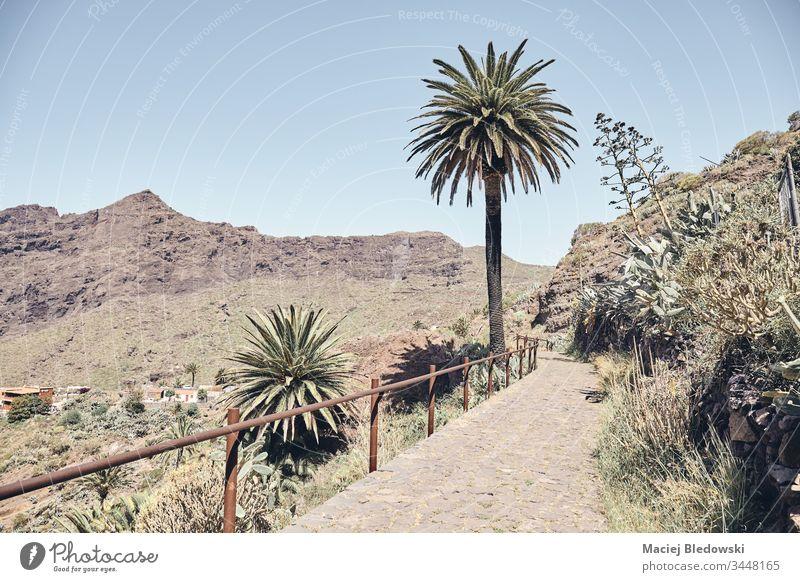 Pfad in der ländlichen Gegend des Teno-Massivs, Teneriffa, Spanien. Berge u. Gebirge Handfläche Weg Landschaft retro Sommer masca gefiltert Natur