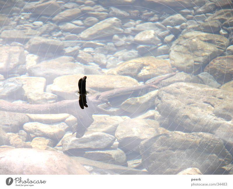 Wurzelgewässer Holz Bayern Reflexion & Spiegelung Wasser Fluss