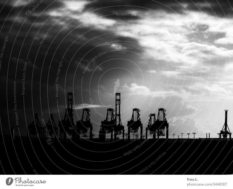 Wie die Giganten reckten die Kräne ihre Hälse kriegerisch gegen den  Himmel, doch das verschwindene Licht nahm ihnen die Kraft. Hafen Hamburger Hafen