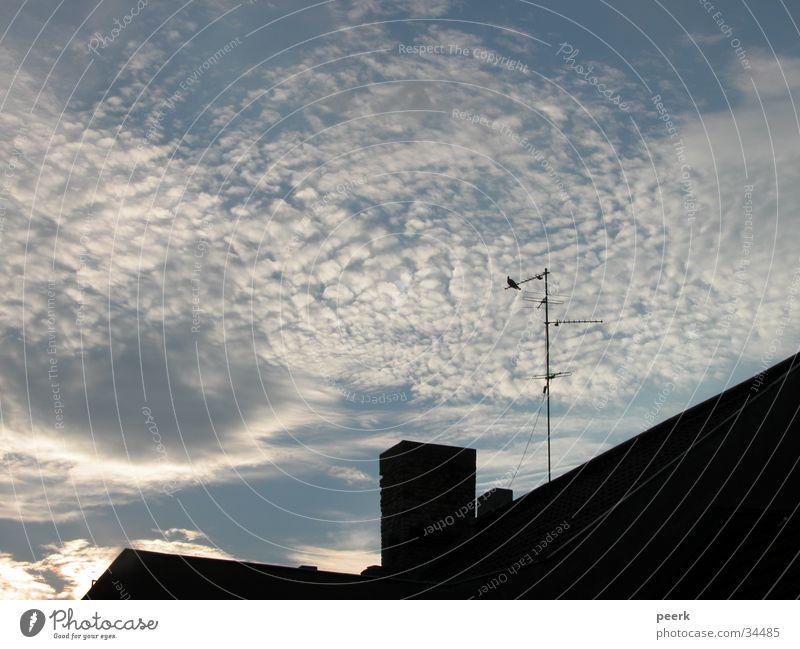 taube auf dem dach Taube Dach Wolken Himmel Abend