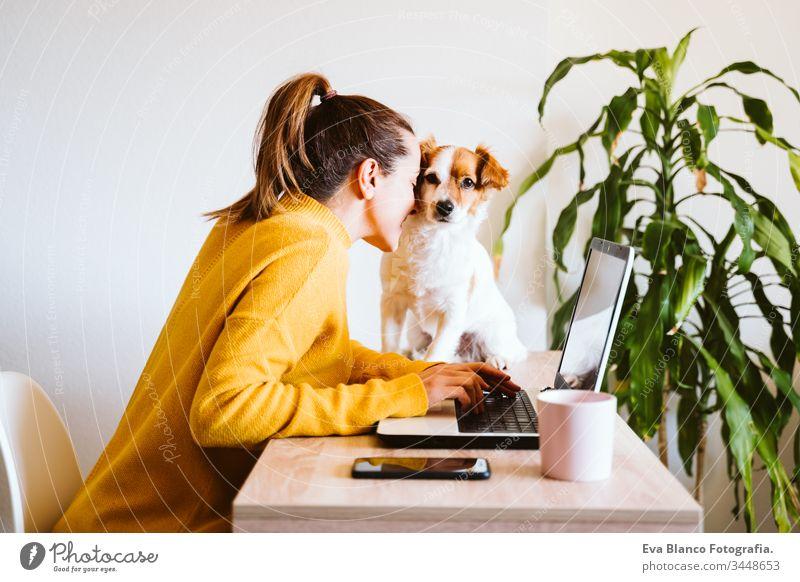 junge frau, die zu hause am laptop arbeitet, daneben süßer kleiner hund. arbeiten sie von zu hause aus, bleiben sie während des coronavirus covid-2019 concpt sicher