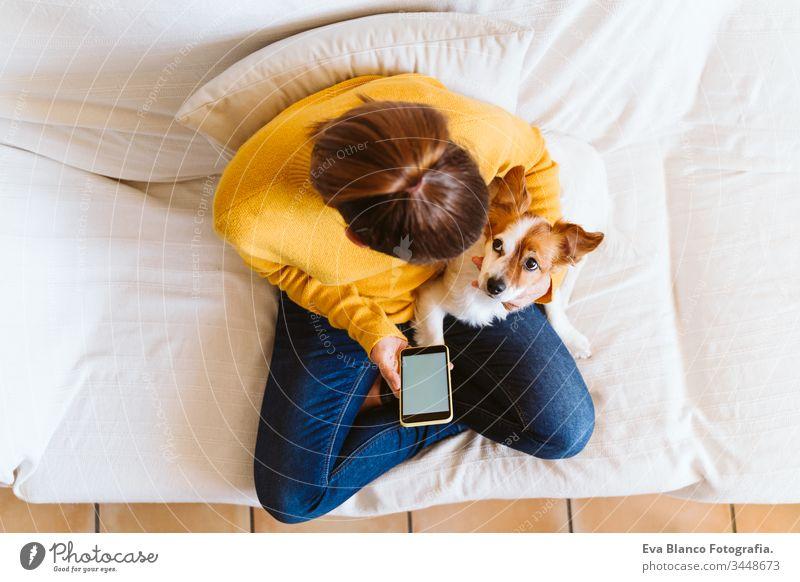 junge Frau mit Mobiltelefon, daneben süßer kleiner Hund. Auf der Couch sitzend, Schutzmaske tragend. Bleiben Sie zu Hause Konzept während Coronavirus covid-2019