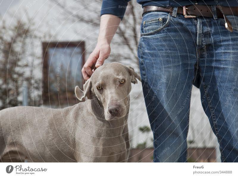 zum Geburtstag... maskulin Bruder Hand Beine 1 Mensch 18-30 Jahre Jugendliche Erwachsene Sträucher Haus Fenster Hose Gürtel Hund Weimaraner Jagdhund Tier stehen