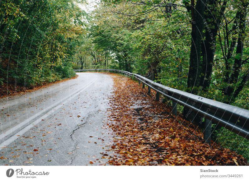 Herbstlandschaft, Straße im Wald fallen Natur Baum Weg Hintergrund Landschaft grün Griechenland evros Rodopi Saison Licht Sonne schön Wälder durch Blätter