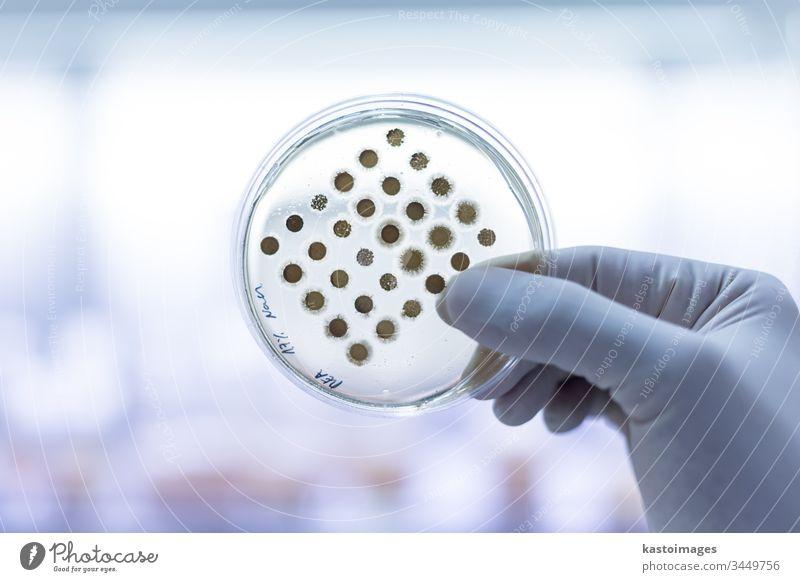 Wissenschaftlerin, die im Rahmen eines wissenschaftlichen Experiments Bakterien in Petrischalen auf Agar-Gel züchtet. Labor Biochemie Erreger wachsen Medizin