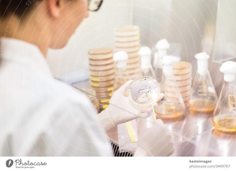 Wissenschaftlerin, die in der Forschungseinrichtung des Coronavirus-Impfstoff-Entwicklungslabors mit Bakterien in laminarer Strömung arbeitet. Labor forschen