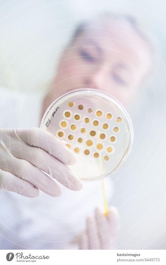 Wissenschaftlerin, die im Rahmen eines wissenschaftlichen Experiments Bakterien in Petrischalen auf Agar-Gel züchtet. Labor forschen Biotechnologie Corona-Virus