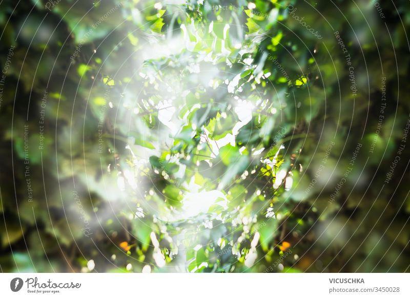 Dschungel-Regenwald grüne Blätter im Hintergrund. Tropische Natur. Im Freien tropisch im Freien Buchse Frühling Textur Saison frisch Ökologie Gartenarbeit