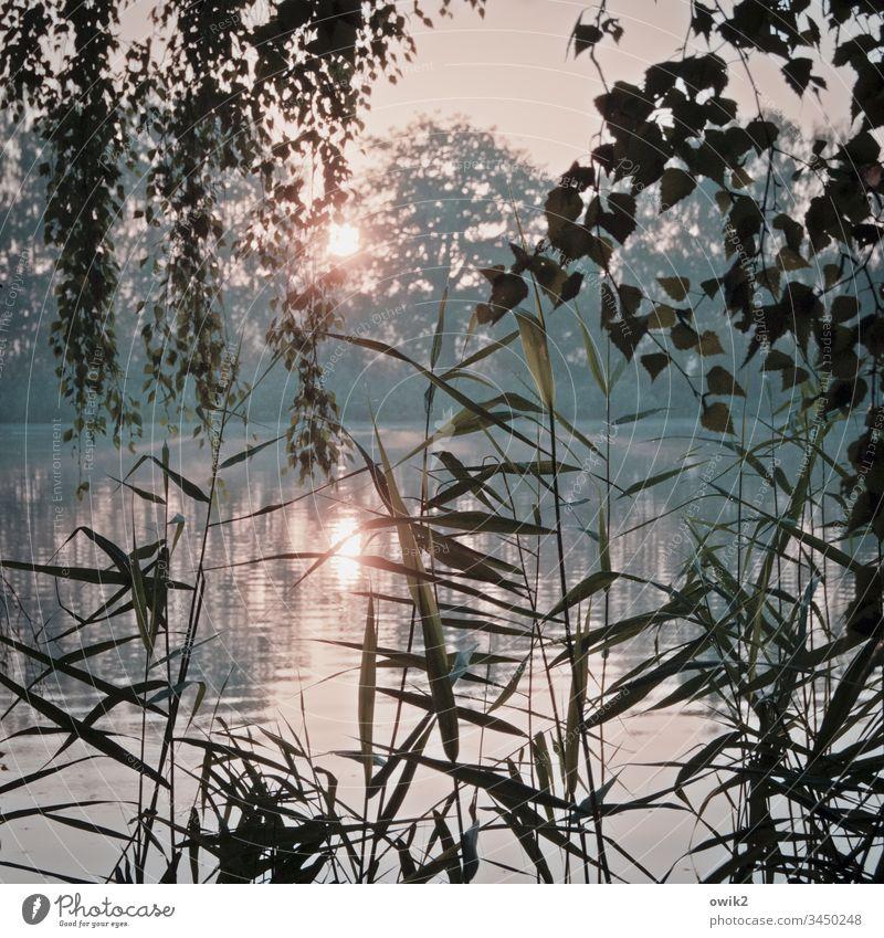 Vorhang auf Morgen Sonnenaufgang Sonnenlicht Landschaft Außenaufnahme Farbfoto Baum Schönes Wetter Morgendämmerung Pflanze Umwelt Gegenlicht Natur