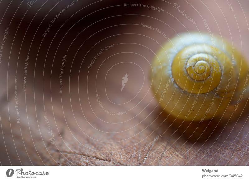 Slow Motion Gesundheit Umwelt Natur Pflanze Schnecke 1 Tier alt atmen genießen gelb Erwartung Ewigkeit geduldig Gleichgewicht warten Meditation Gebet