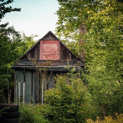 Schrebergartengärtners Schrebergartengartenhäuschen Himmel Natur grün Pflanze Baum rot Haus Fenster Architektur Holz Garten Metall braun Fassade