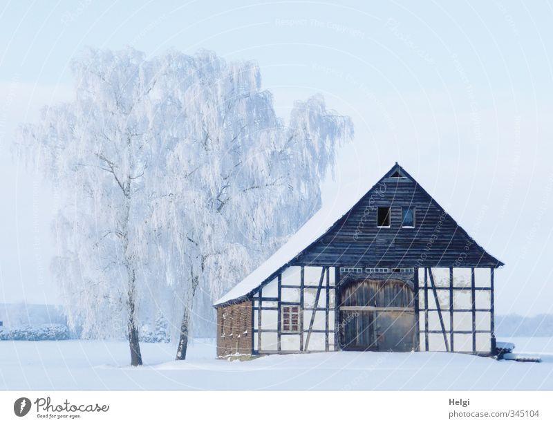 der nächste Winter... Umwelt Natur Landschaft Schönes Wetter Eis Frost Schnee Baum Birke Dorf Haus Gebäude Architektur Fachwerkhaus alt stehen ästhetisch