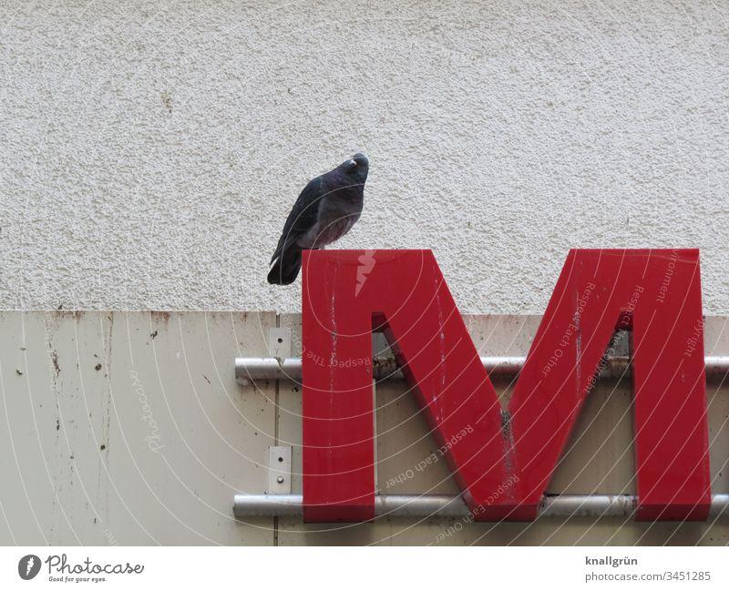 Stadttaube sitzt auf dem Buchstaben M einer Leuchtreklame Taube Typographie Schilder & Markierungen Schriftzeichen Letter Lateinisches Alphabet Kommunizieren
