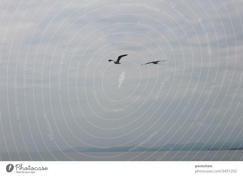 Zwei Möwen fliegen vor wolkigem Himmel übers Meer. vögel meer Felsen wolken nebel Wasser Küste Landschaft Fliegen freiheit flügel schwingen paar Blau weiß klein