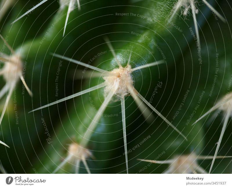 Autsch! Kaktus Kakteenstacheln Kaktuspflanze stachelt Pflanze Pflanzenteile Natur Symmetrie symmetrisch Perfektion Perfektionist einfach natürlich