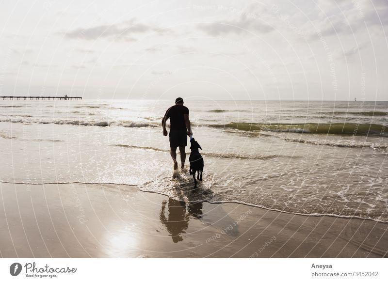 Ein Mann und sein Hund spielen am Strand 2017-2020 erste Einfuhr Texas Hündchen bester Freund des Menschen bester Freund Haustier Tier Sommer Sommertag