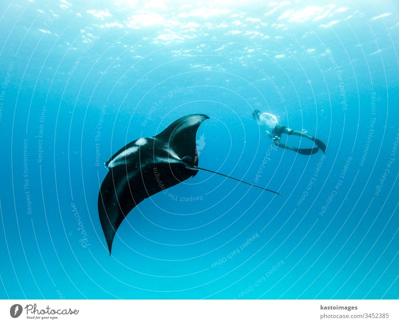Unterwasseransicht des schwebenden ozeanischen Riesenmantarochens, Manta Birostris , und des frei tauchenden Menschen im blauen Ozean. Beobachten der Unterwasserwelt während einer Abenteuer-Schnorcheltour auf den Malediven.