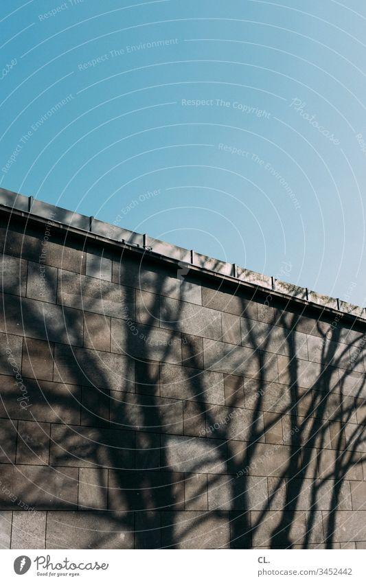 schatten eines baums auf einer wand Schatten Baum Wand Gebäudeteil Architektur Menschenleer Außenaufnahme Farbfoto Mauer Tag grau Strukturen & Formen Muster
