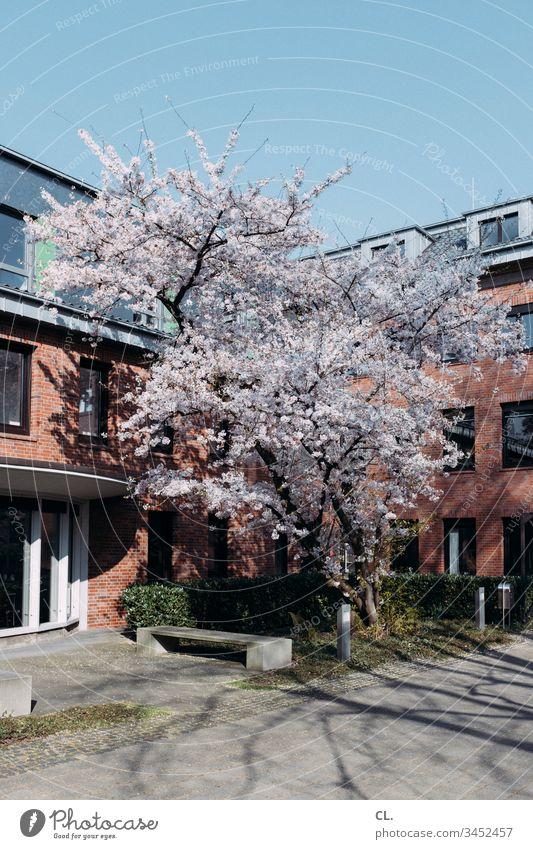 baum im frühling vor wohnhäusern wohnen Baum Architektur Wohnhaus Haus Wege & Pfade Frühling Schönes Wetter Blauer Himmel Wolkenloser Himmel blühen Menschenleer