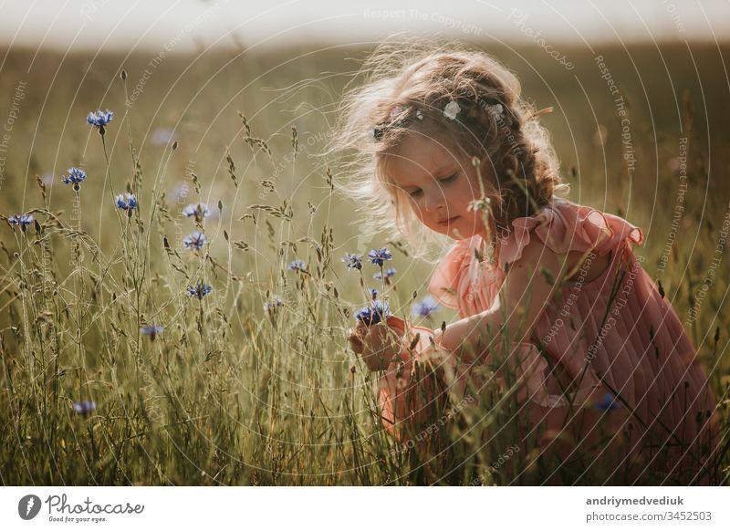 Mädchen auf dem Feld sammelt einen Blumenstrauß. kleines Mädchen sammelt Blumen auf dem Feld Kind Gras Sommer Natur Blütezeit Lifestyle schön Schönheit Kleid
