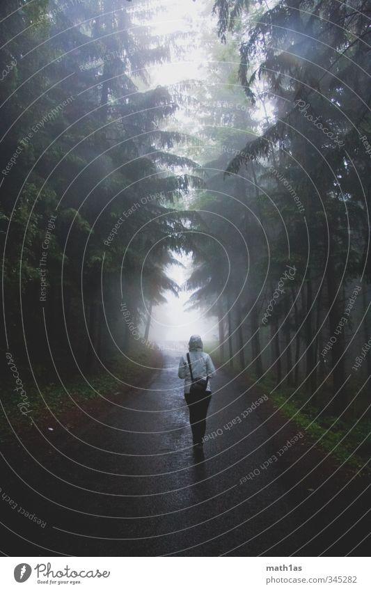 Märchenwald Natur Baum Wald wandern Hoffnung Abenteuer Ferien & Urlaub & Reisen Straße gehen Waldlichtung Nebel Tunnelblick Allee Farbfoto Außenaufnahme