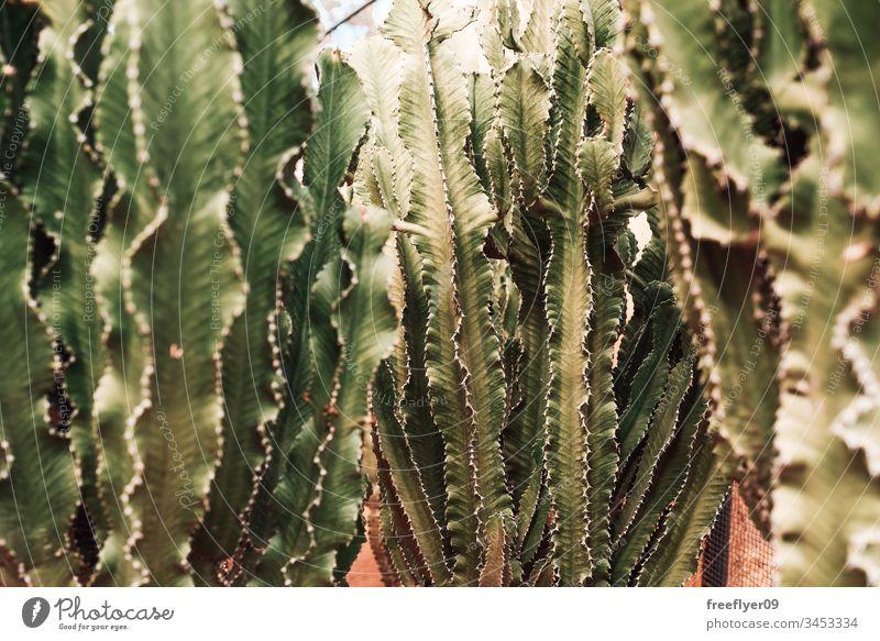 Grüne Kakteen, die auf Schmutz wachsen Hintergrund schön botanisch Botanik farbenfroh Gefahr Dekoration & Verzierung Design trocknen Erde exotisch Flora geblümt
